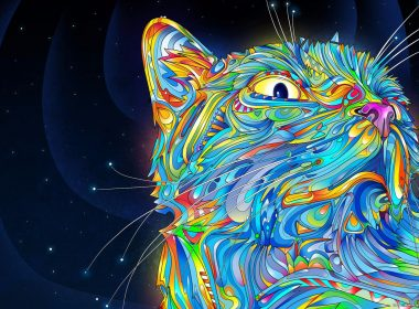 3840 × 2160 Cute Cat abstract HQ Background