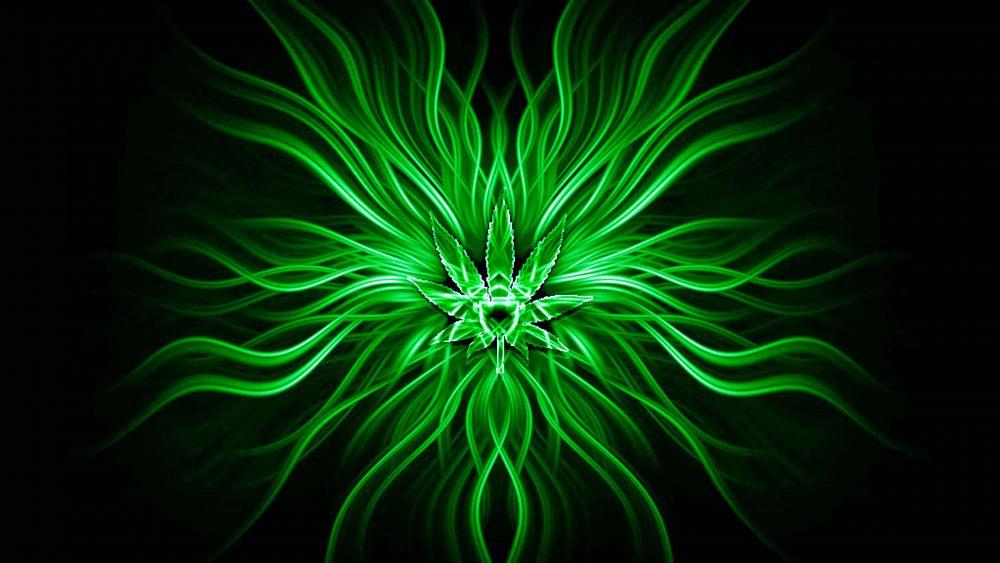Green Abstract Flower Design Wallpaper [3840 × 2160]