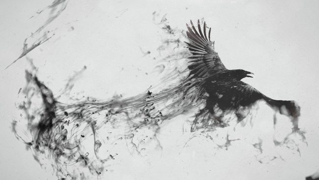1920 × 1080 Bird White Abstract Wallpaper For Mobile