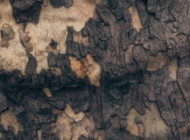 Old Tree 4K texture 4096 x 2160