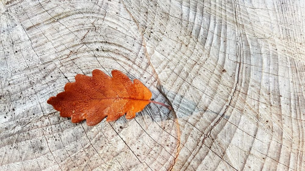 Wood Texture Background with Autumn Leaf 1280 × 720