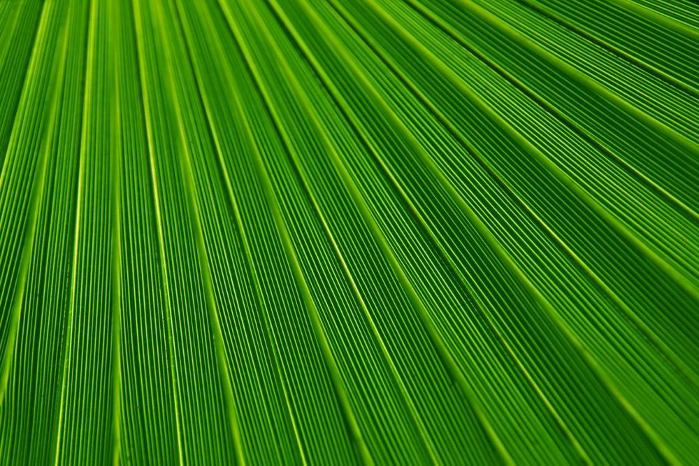 Stunning Green Textures background 1280 × 853