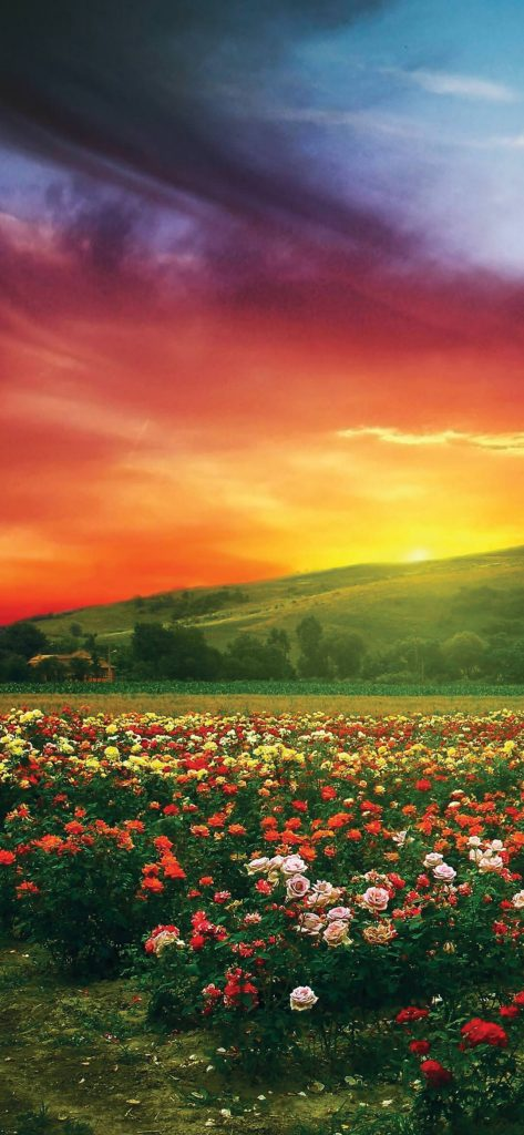 amazing-flower-garden-1080x2340-wallpapers