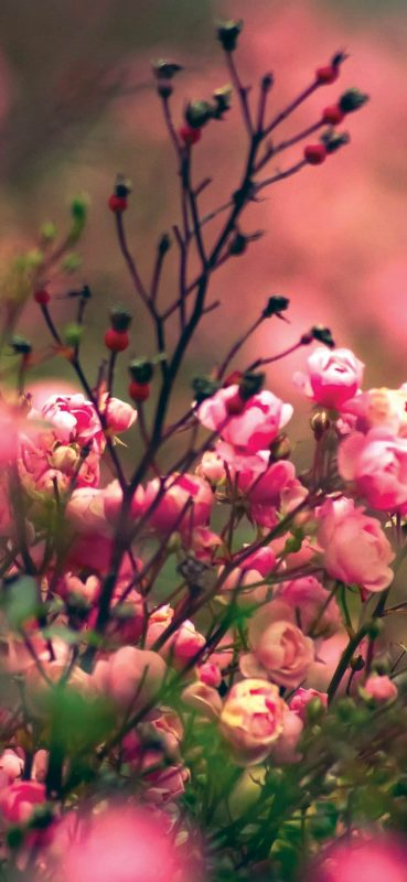 Blur-flower-photography-1080x2340-wallpaper