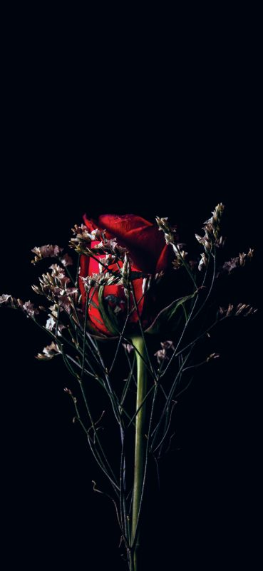 Beautiful-Red-Rose-1080×2340