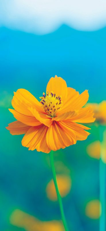 1080x2340-blur-yellow-flower-wallpapers