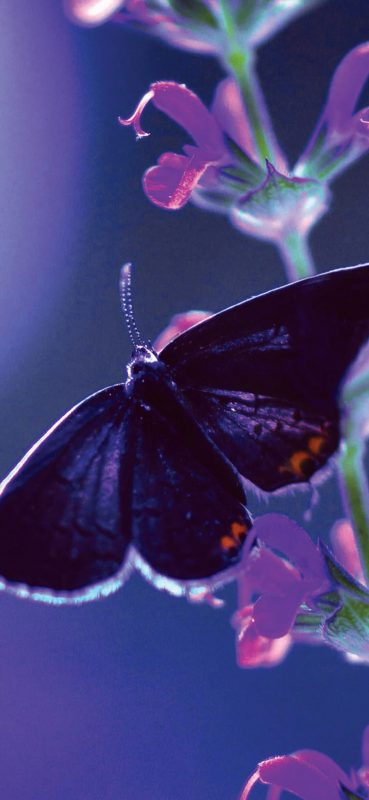 butterfly-flower-plant-1080x2340-wallpaper