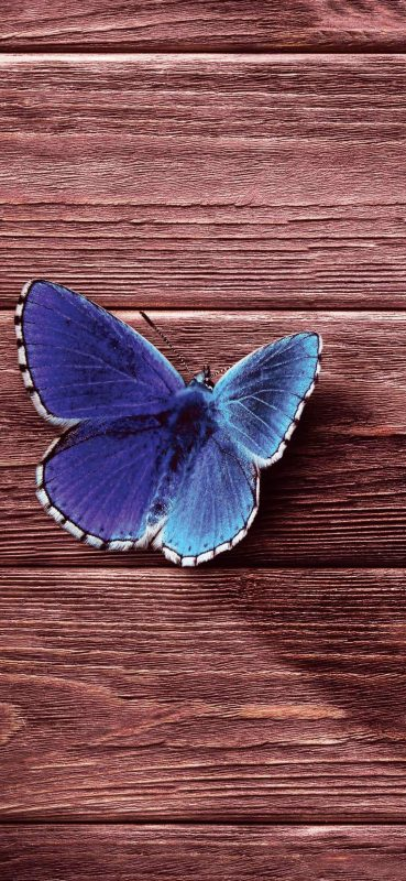 butterfly-on-wood-board-wallpaper-1080x2340