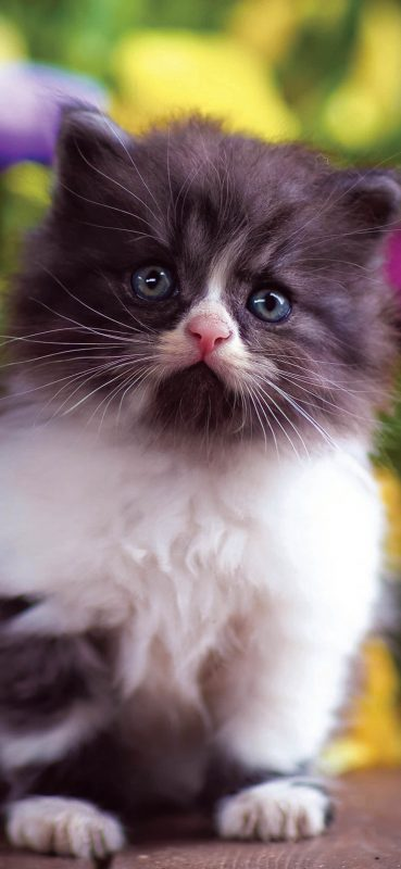 cute-cat-hd-wallpaper-1080x2340