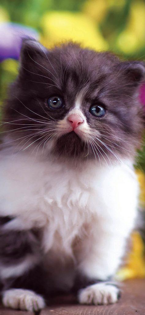 cute-cat-hd-wallpaper-1080x2340
