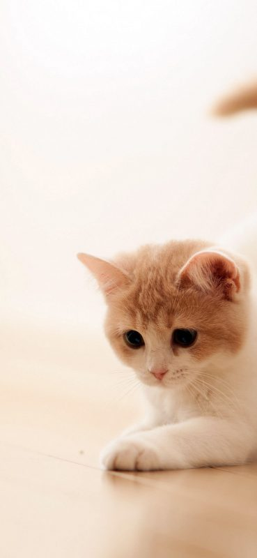 Cute-Cat-HD-Wallpaper-1080×2340