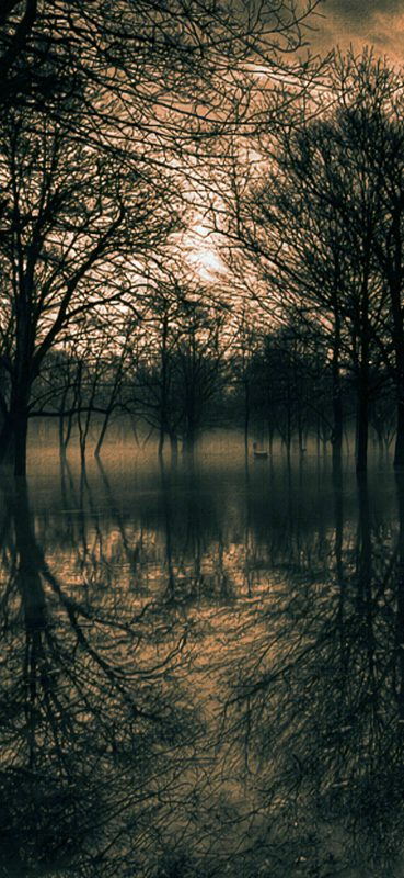 Dark-Forest-Surrounded-Water-1080×2340