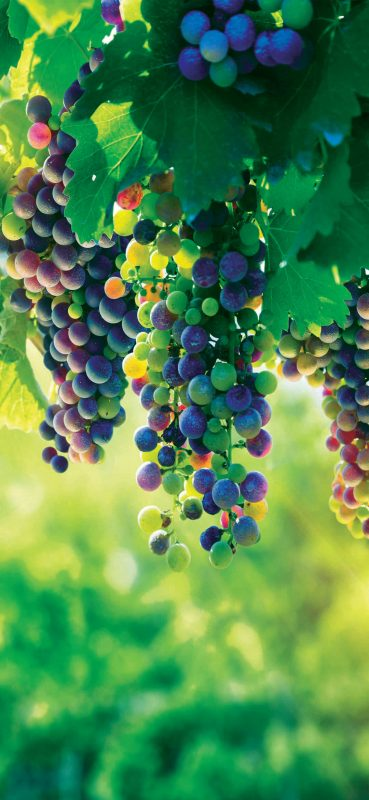 fresh-grapes-photography-wallpaper-1080x2340