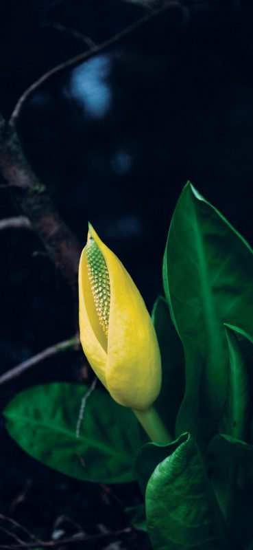 Beautiful-Green-and-Yellow-Plant-1080×2340