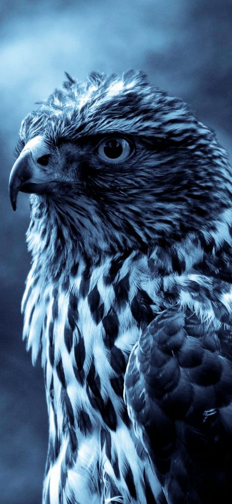 High Quality Wild Eagle Photography [1080×2340]