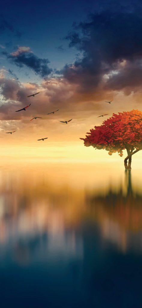 Horizon-Birds-And-Tree-HD-1080×2340