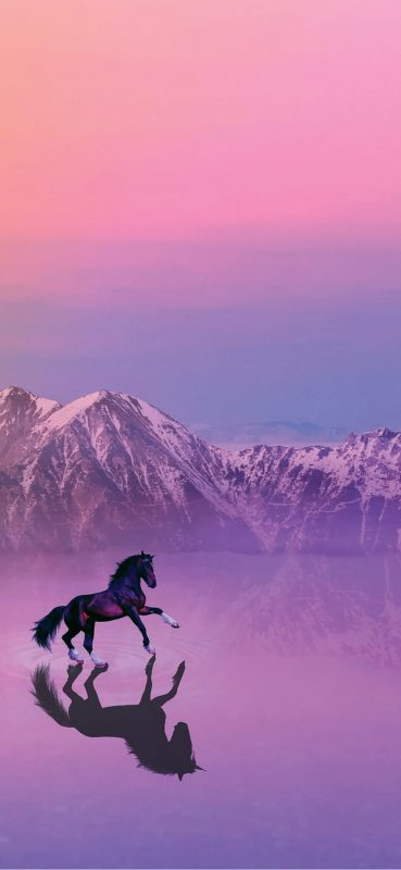 Horse-Mirror-Photography-1080×2340