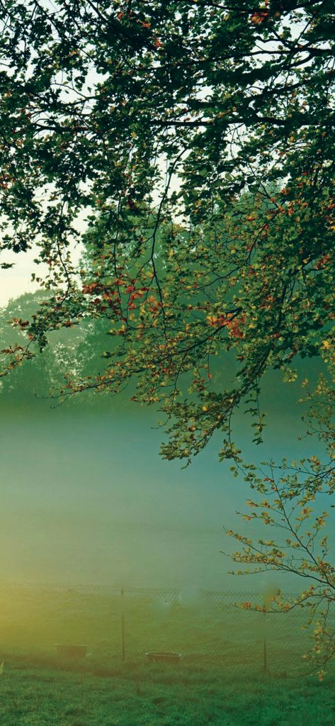 morning-tree-and-fog-wallpaper-1080x2340
