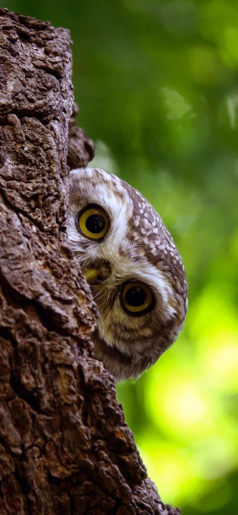 owl-in-tree-house-1080x2340-wallpaper