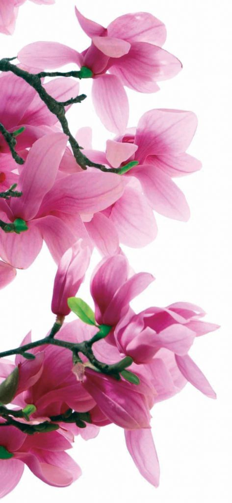 adorable-pink-flowers-1080x2340-wallpaper