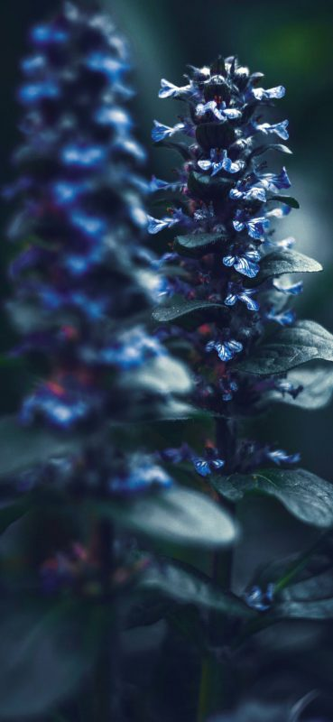 Plant-Blur-HD-Photography-1080×2340