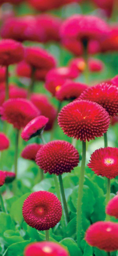 red-flowers-blur-1080x2340-wallpaper