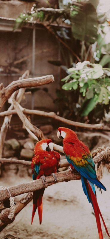 red-parrot-hd-photography-1080x2340-wallpaper