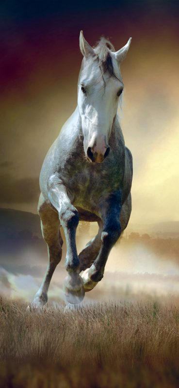 running-horse-hd-wallpaper-1080x2340