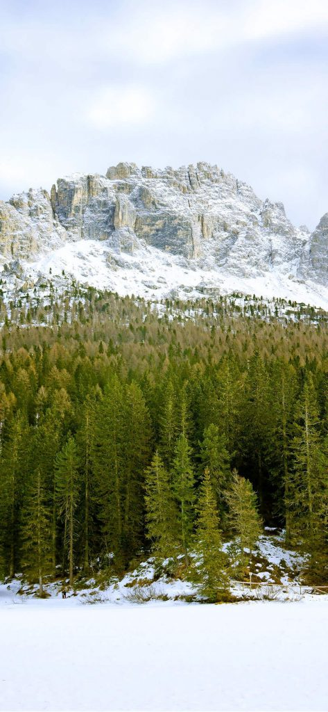 1080x2340-wallpaper-snow-forest-and-mountain