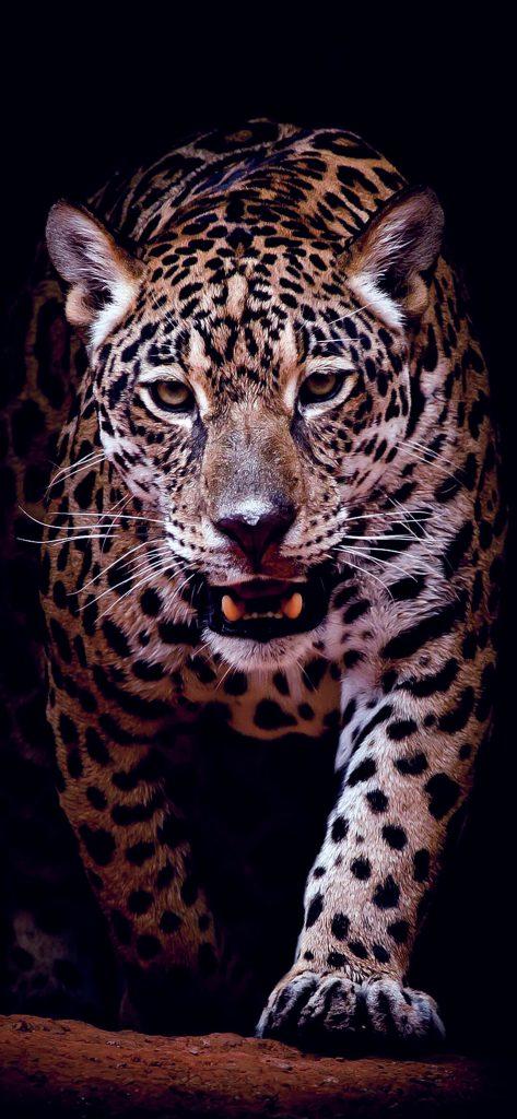 Stunning Jaguar HD Wallpaper [1080×2340]