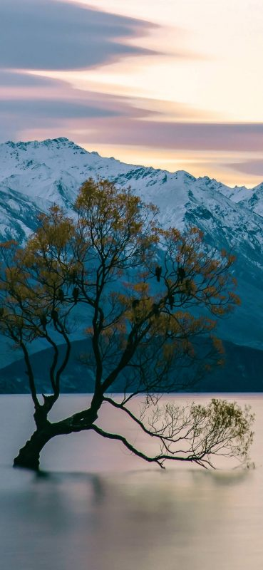 tree-in-lake-near-mountain-wallpaper-1080x2340