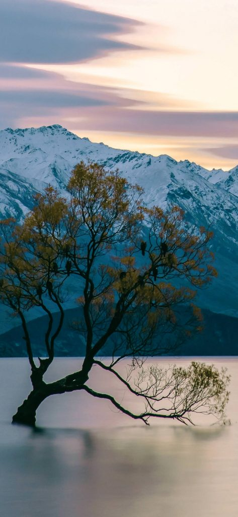 tree-in-lake-near-mountain-wallpaper-1080x2340
