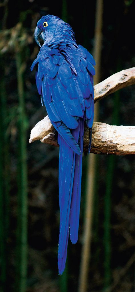 Unique Blue Parrot [1080×2340]