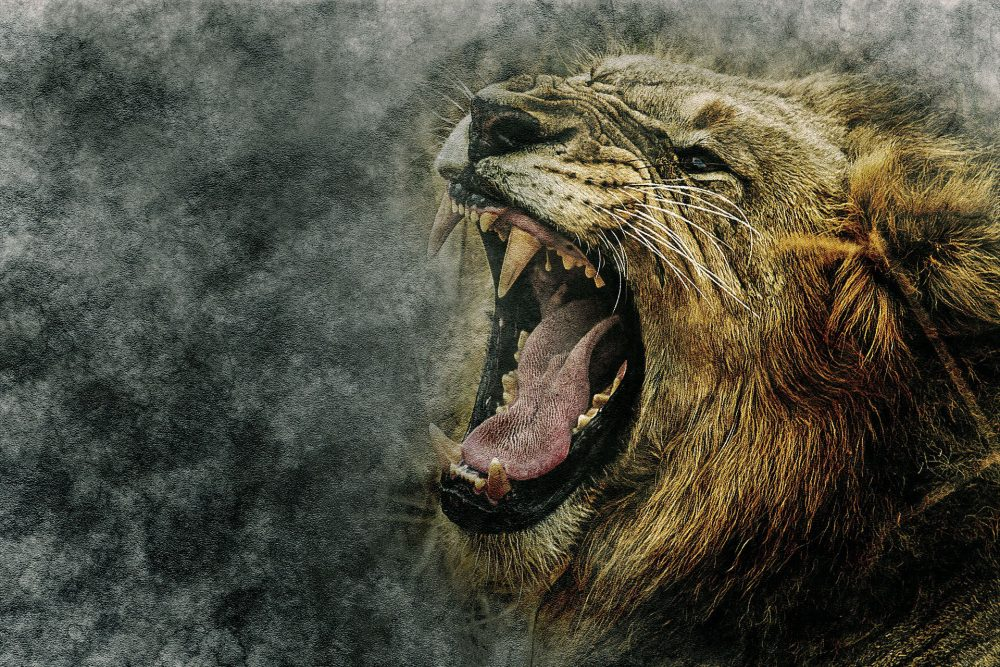 HQ Roaring Lion wallpapers 004 1920x1280