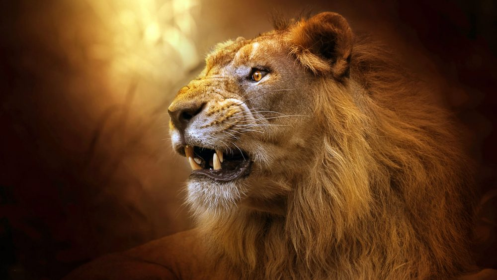 gorgeous Roaring Lion 009 3840x2160 380x280