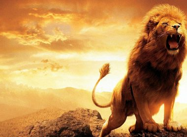 Stunning Roaring Lion wallpapers 011 2736x1824 380x280