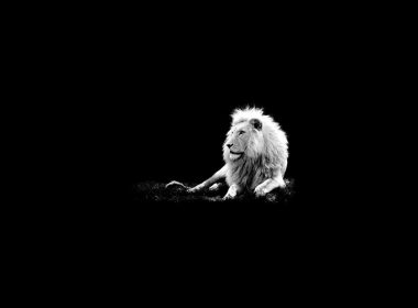 Roaring Lion wallpapers 022 1920x1080 380x280
