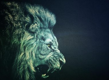 Roaring Lion wallpapers 025 1920x1080 380x280