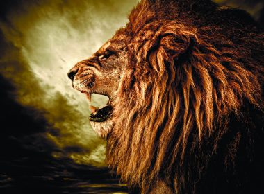 Roaring Lion wallpapers 027 2560x1600 380x280