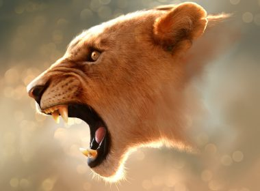 Roaring Lion wallpapers 044 1920x1408 380x280