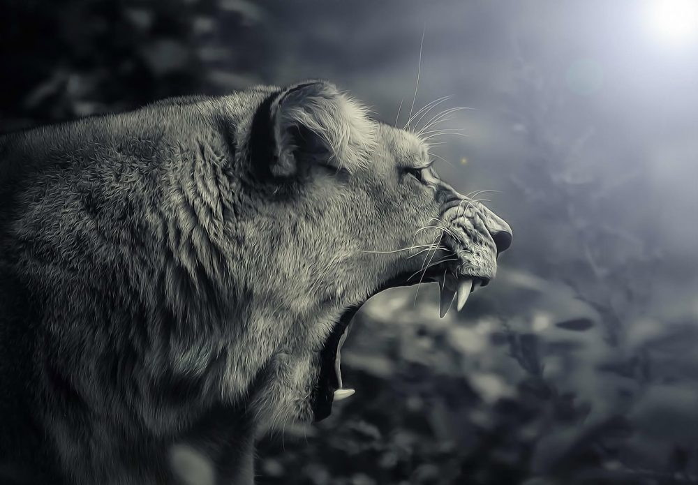 Black and White Roaring Lion High Quality-1920x1335
