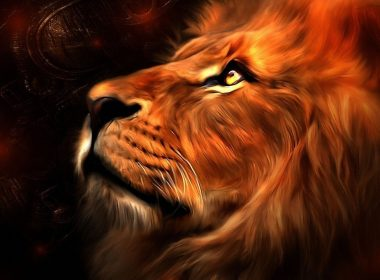 Deep Roaring Lion wallpapers-053 1920x1080