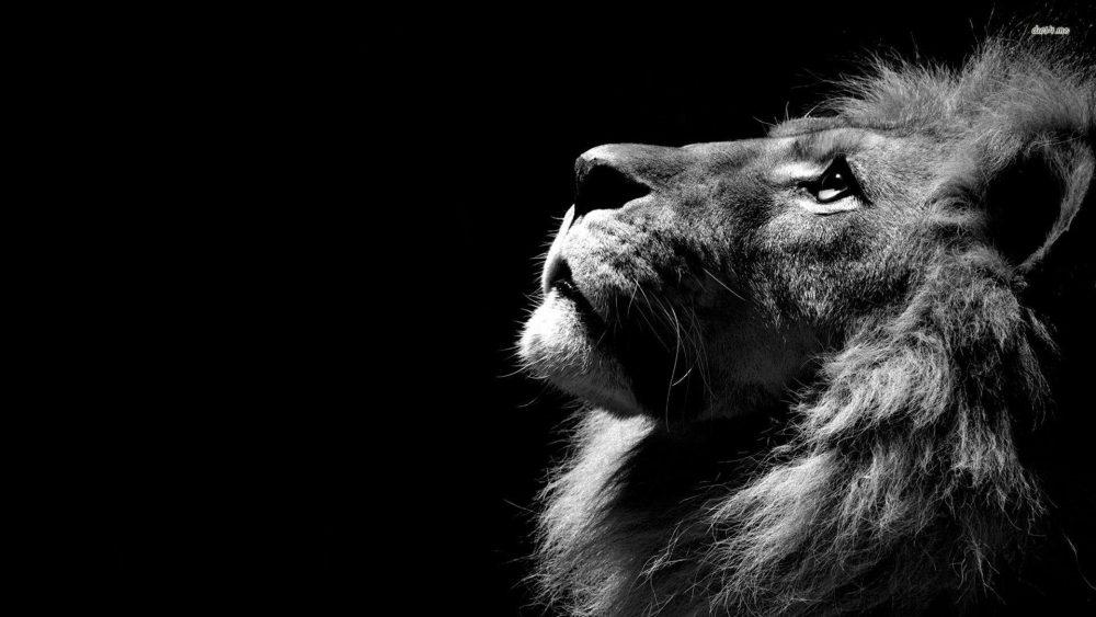Roaring Lion wallpapers 059 1920x1080 380x280