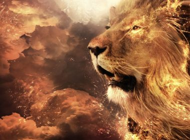 Roaring Lion wallpapers 062 1920x1080 380x280