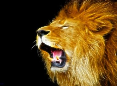 Roaring Lion wallpapers 069 2560x1600 380x280