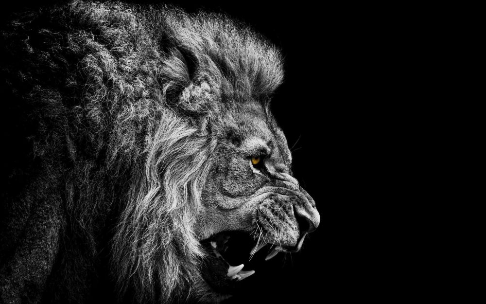 Roaring Lion wallpapers 070 1920x1200 380x280