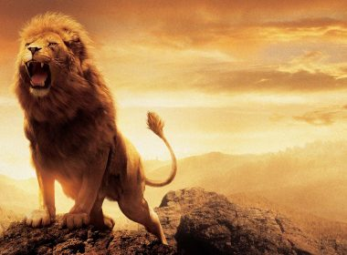 Roaring Lion wallpapers 071 3840x2160 380x280
