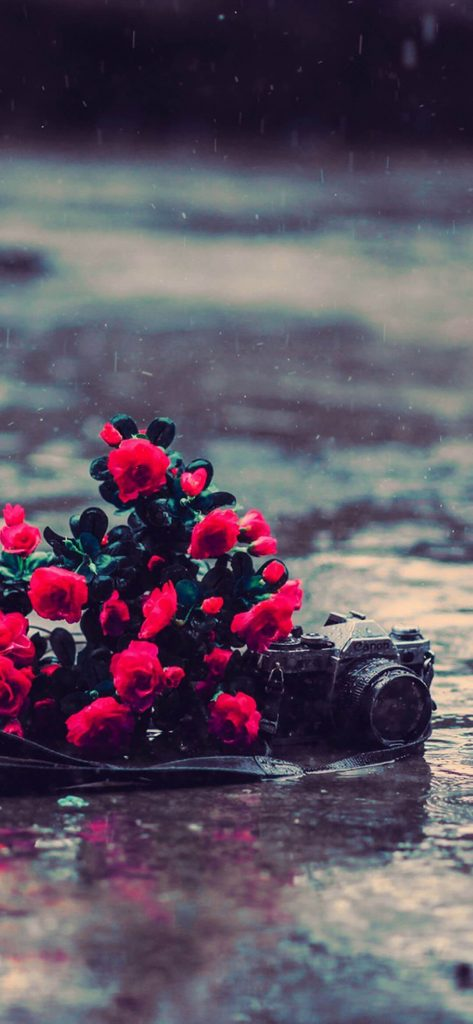 Amazing Red Rose Near Camera HD Wallpaper [1080x2340]