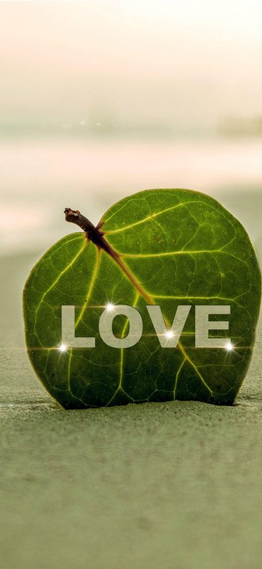 1080x2340-Love on Leaf HD Wallpaper