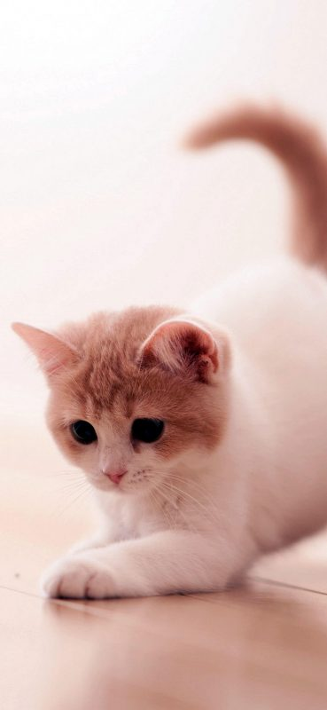 Playing Cute Cat Wallpaper-1080x2340